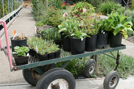 London Public Library Plant Exchanges – various locations across London. May 12,19, 26 & June 2