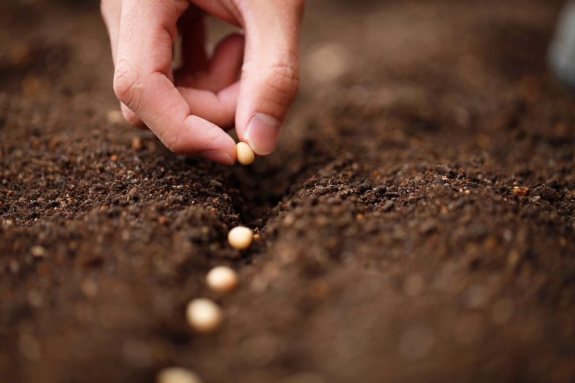 Heirloom, Organic, Hybrid etc – What types of Seeds to plant?