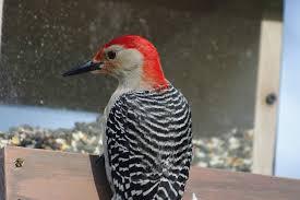 Clean Your Bird Feeders