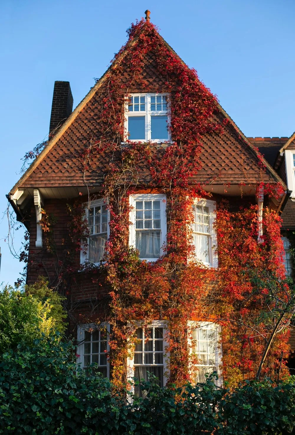 Red Ivy on a London House