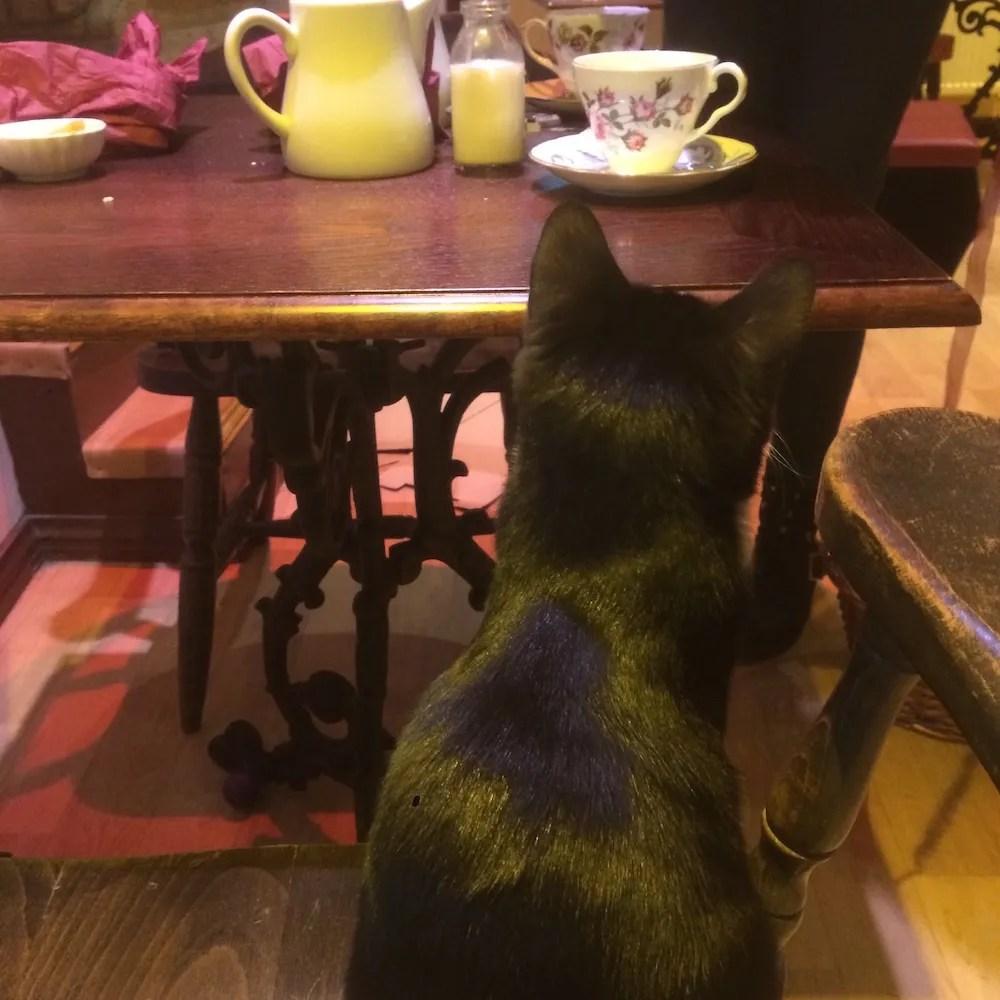 London on a Rainy Day - Cat Cafe