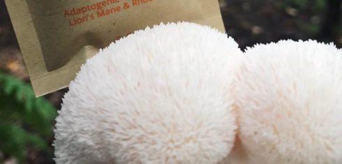 lions mane mushroom close up