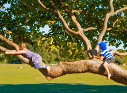 natasha-bennett_tree_climbers