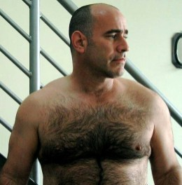 gay-bear-hairy-dad