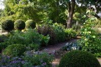Garden 30 July 2011