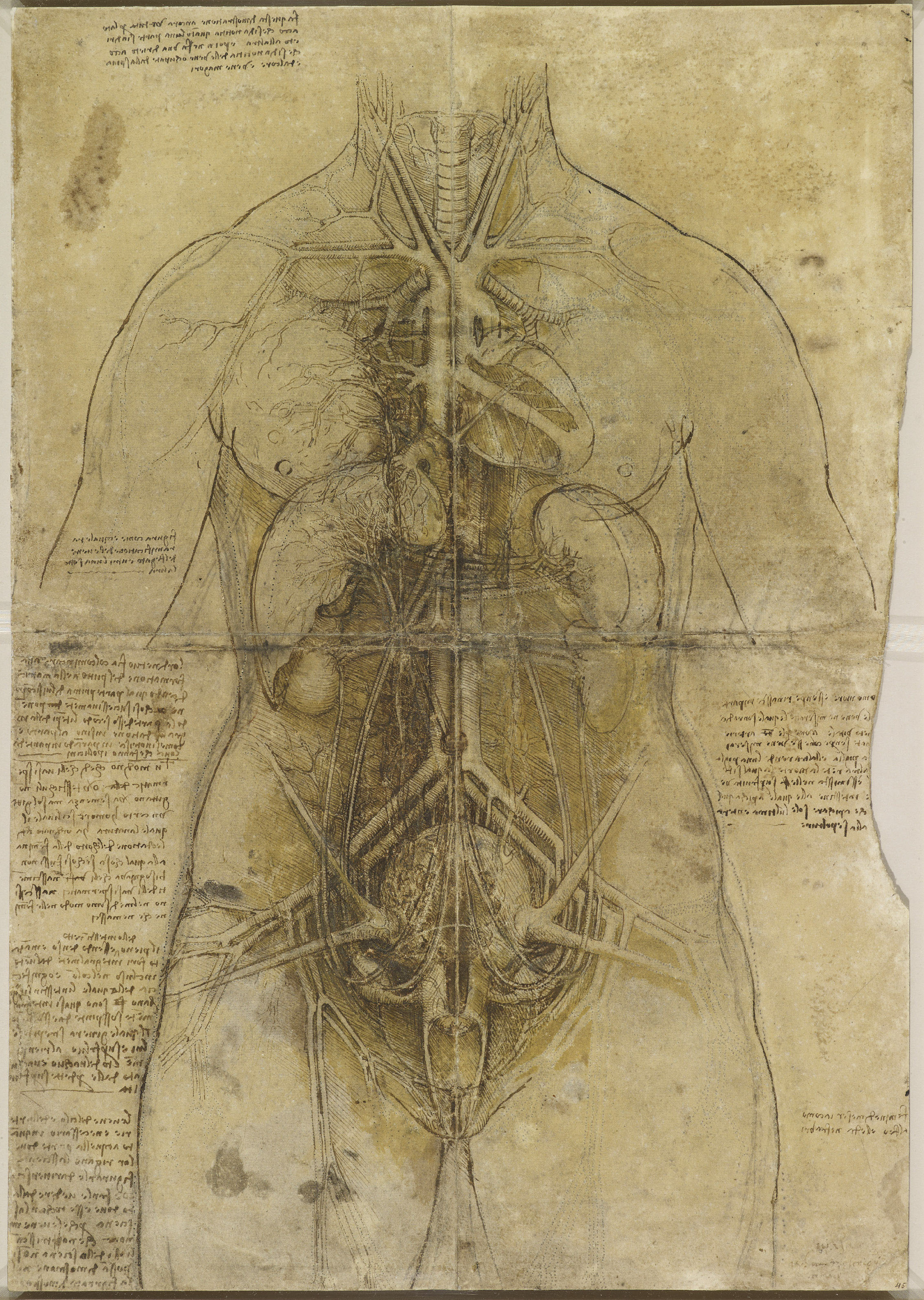 Leonardo da Vinci, 'The cardiovascular system and principal organs of a woman', c.1509-10