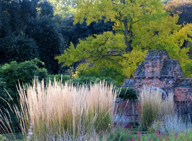 Calamagrostis 'Karl Foerster' in the Knot Garden with Robinia Pseudoacacia 'Frisia' in the background