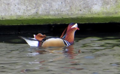 Colour co-ordinated wildlife
