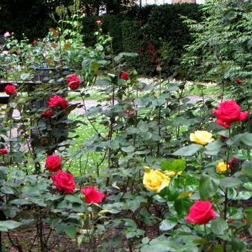 Bradshaw's Hand Book to London, Roses in Lonsdale Square Gardens (no.68)
