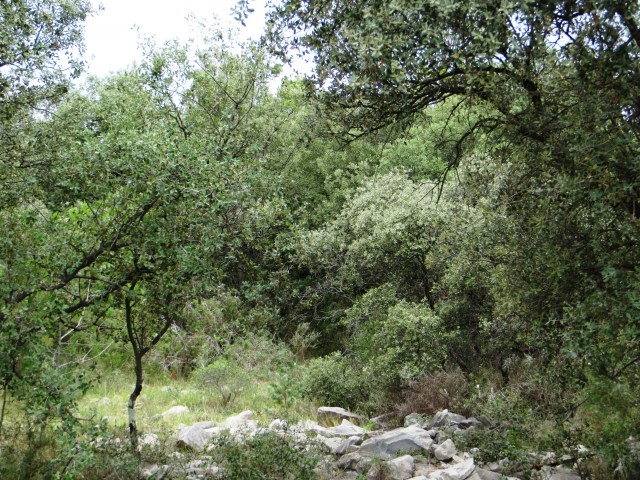 Garrigue outside Vacquieres