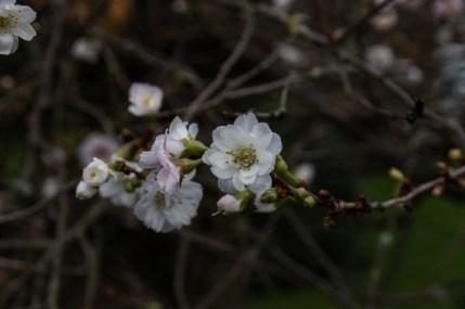 Winter flowers in Hayes Lane