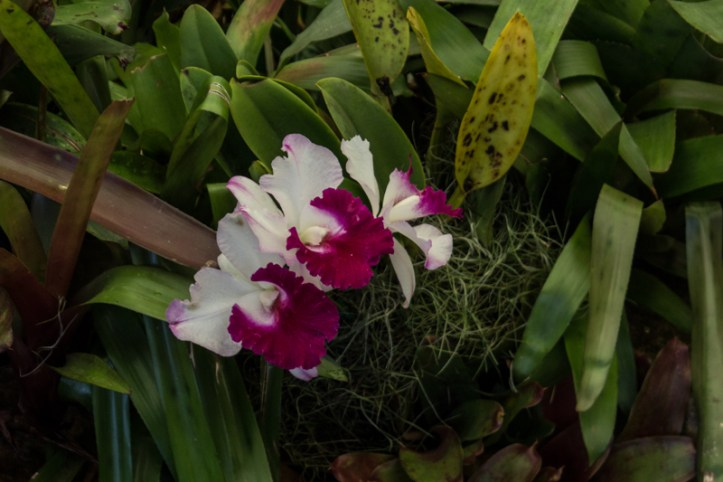 16-1-29 Durban Botanic Gardens LR-9255