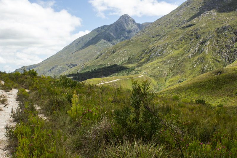 In the Marloth Nature Reserve, Swellendam