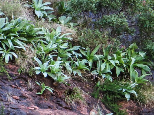 Lush green plants in the damp under the rocks