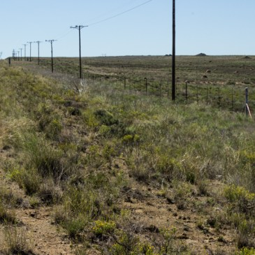 Bloemfontein to Graaff Reinet
