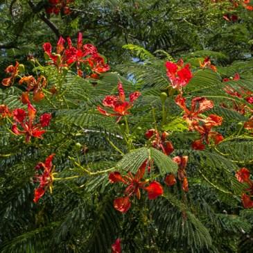 Flowers & Trees in Graaff Reinet