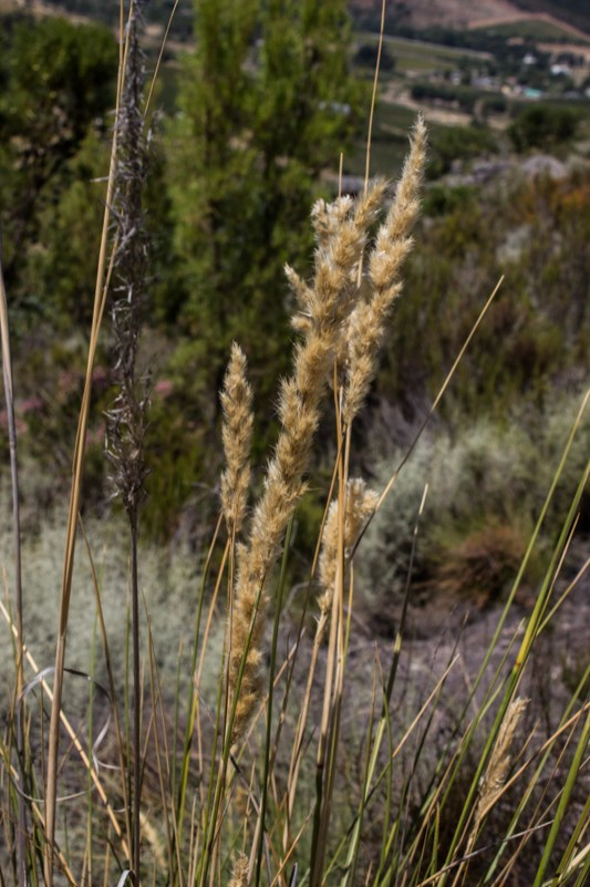 Grasses on the trail at La Motte