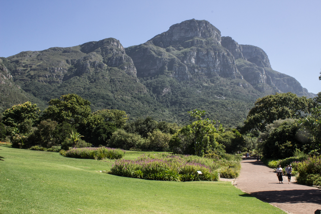 The Lawn, Kirstenbosch