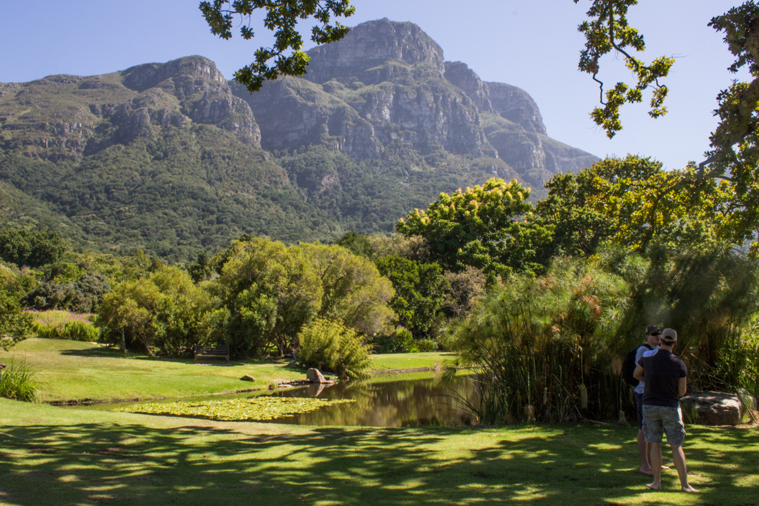The Main Pond, Kirstenbosch