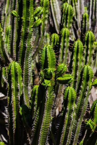 16-2-29 Kirstenbosch LR-2049