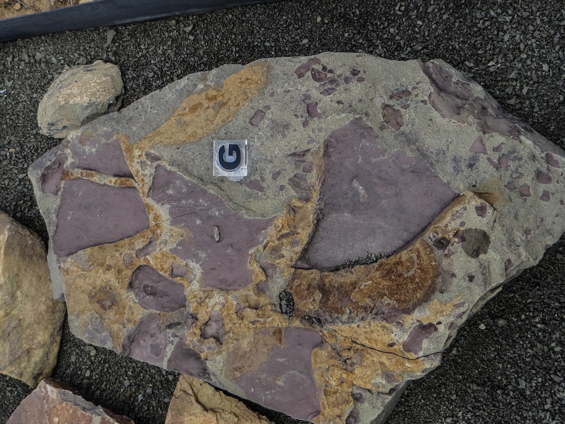 Mudflake breccia, The Fossil Trail, Karoo National Park