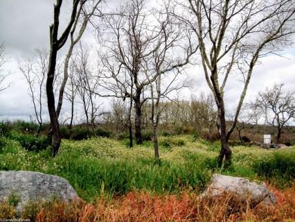 Chafurdao do Vale de Cales, April 2013, LR-5293
