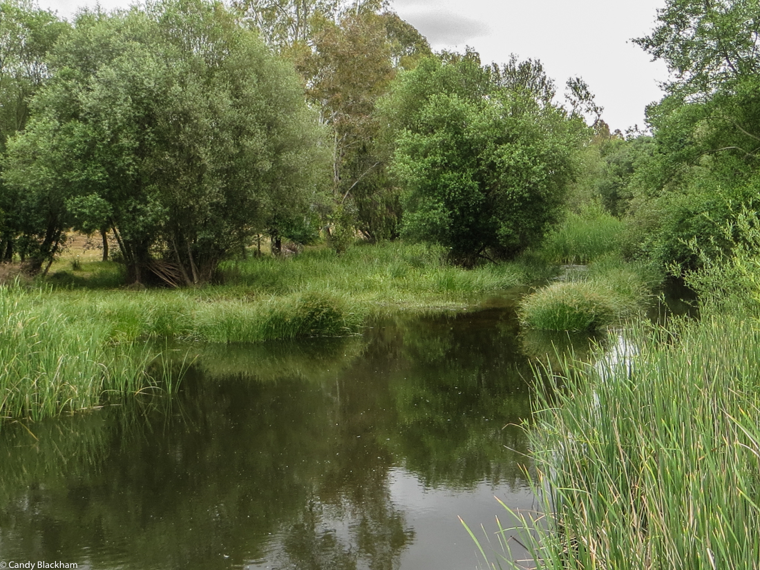 The River Xevora