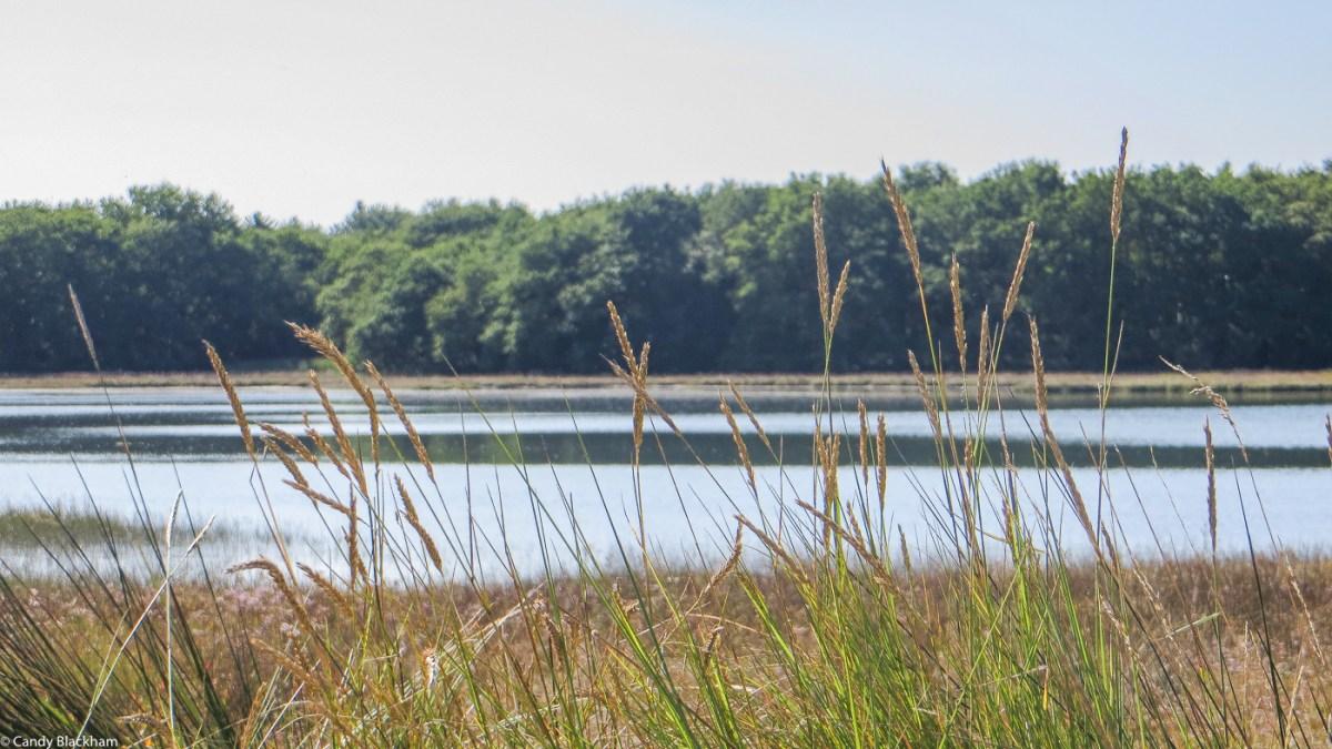 Ruisseau du Demi-Ville, LIstoir