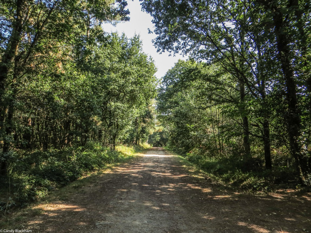 A path through the wood at St Degan