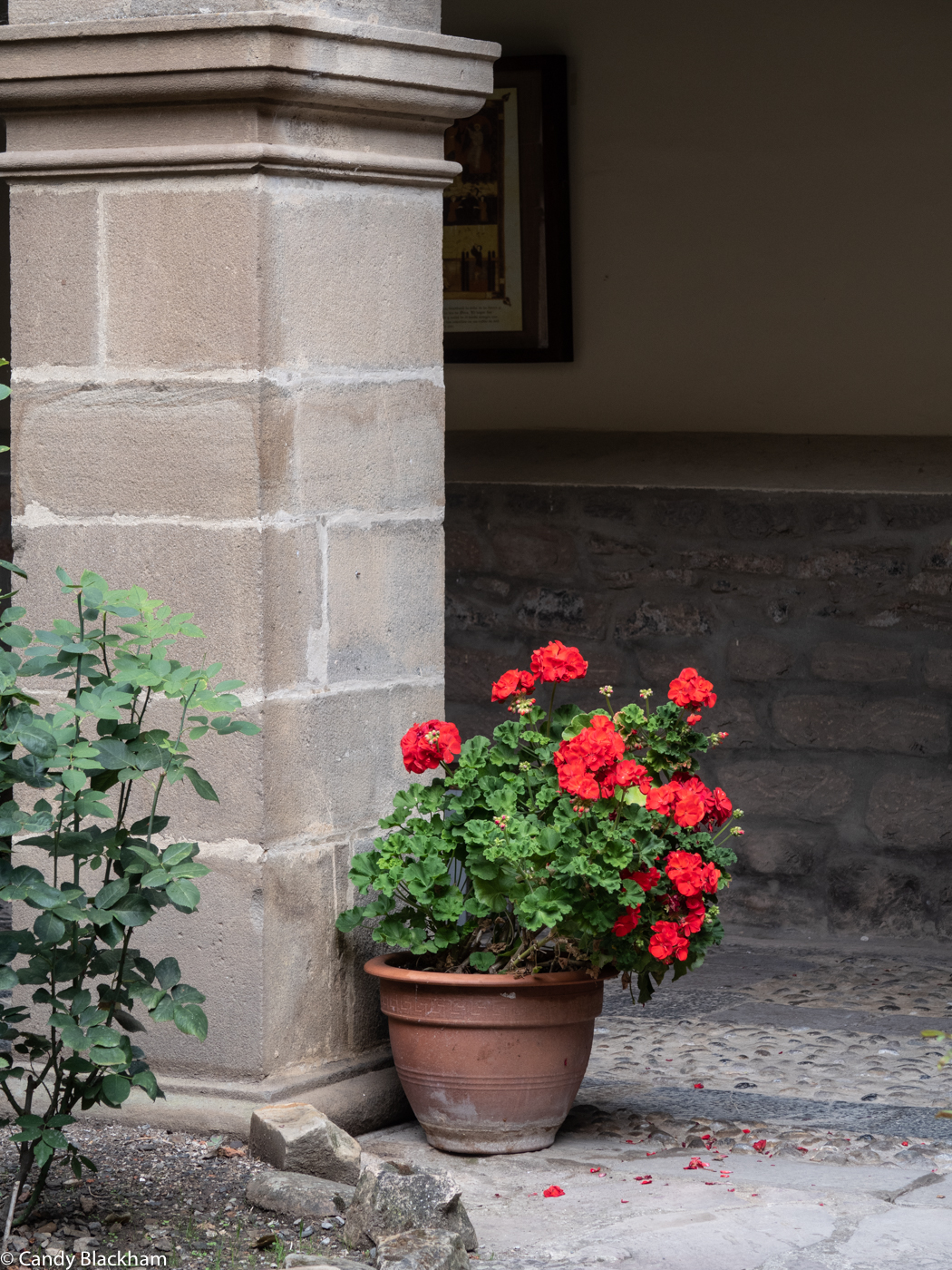 Pot of geraniums in the Cloister of San Toribio