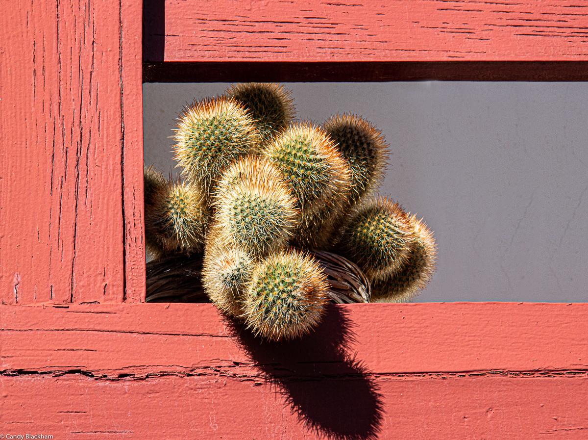 Cactus on a balcony