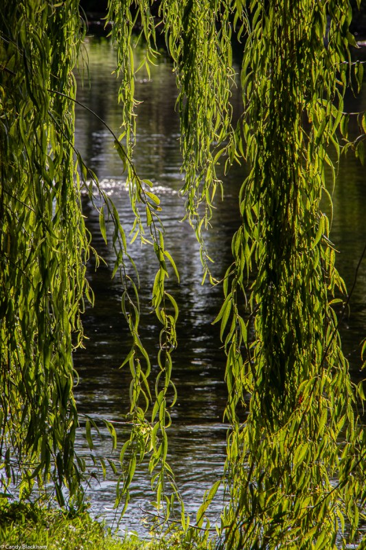 River Parks in Monforte de Lemos