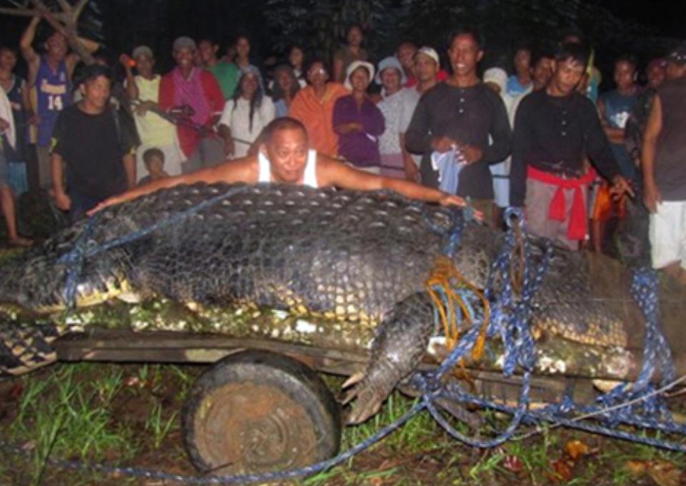 largest-crocodile-in-captivity
