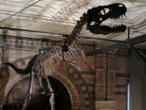 natural history museum img0003