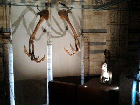 natural history museum img0008