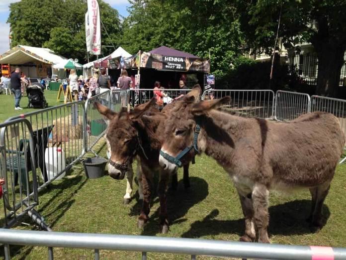 rochester festival hayvanlar