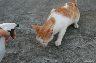 670px-Use-a-Spray-Bottle-on-a-Cat-for-Training-Step-4