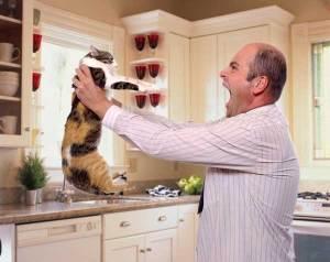 man-shouts-at-cat
