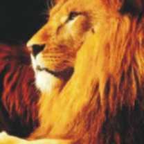 lion-totem-300-150x150