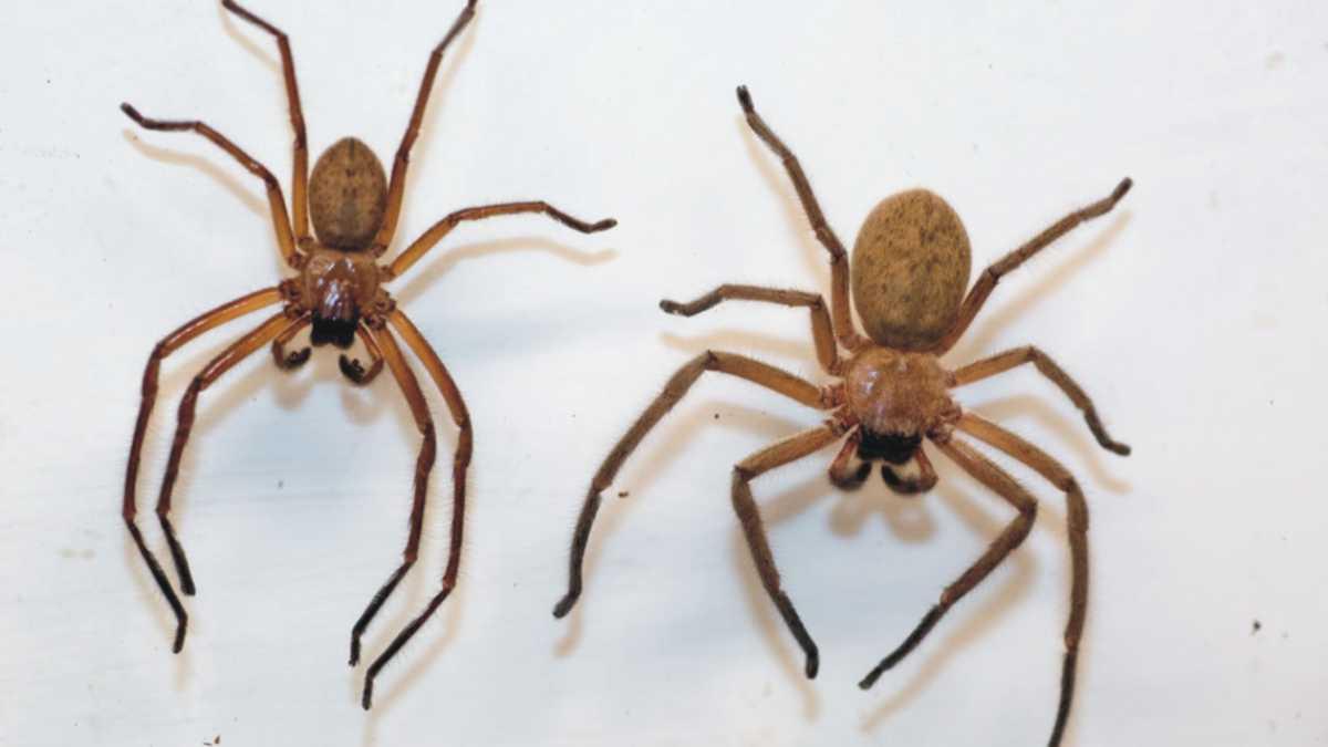 animal spirit spider