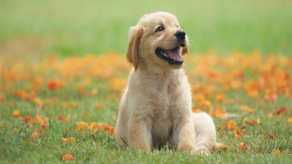 animal spirit dog -- dog spirit animal