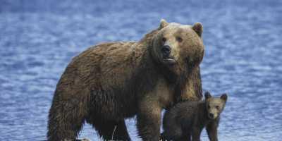 Animal Spirit Bear: What Does Bear Animal Spirit Say About You?