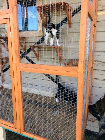 Debbie's Cat House 1