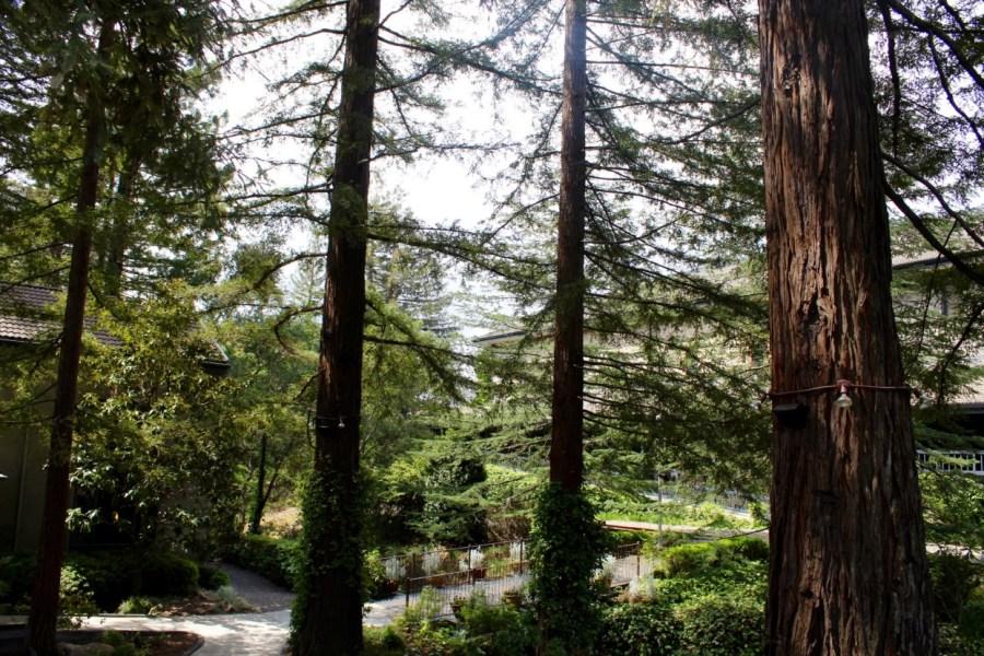Sonoma_California_Travel_Guide24