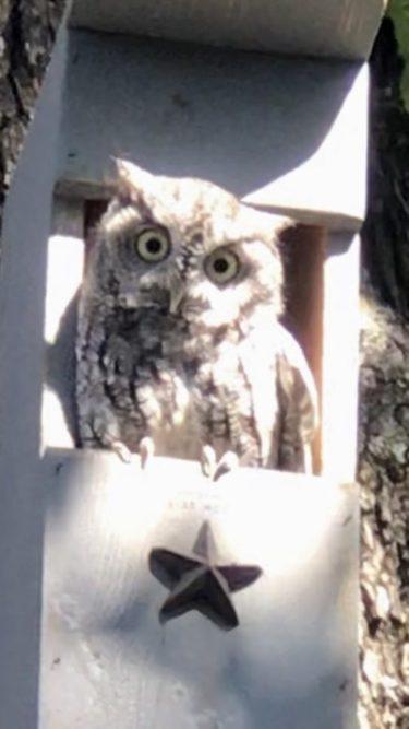 Owl in Owl house