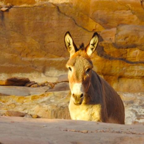 Petra, Jordan with Travel Talk Tours