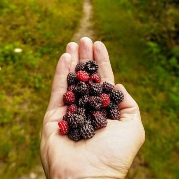 Dez dicas para comida em trilhas de longa distância