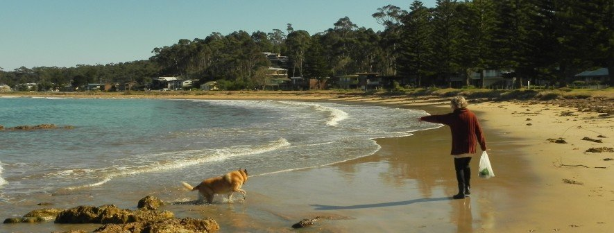 dogs welcome Maloneys Beach