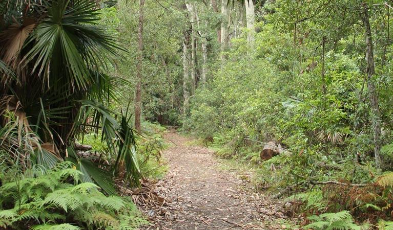 Murramarang National Park short and long walks