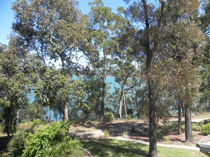 Spotted Gum Forest at Longbeach Clifftop Retreat